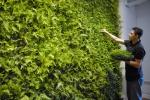 Озеленена фасада