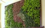 Жива зелена фасада