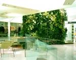 Интериорна зелена фасада