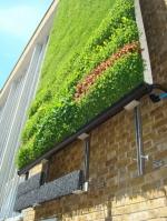 Интериорни зелени стени