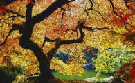 Мозайка картина - Есен