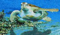 Картина от декоративна мозайка - Костенурка